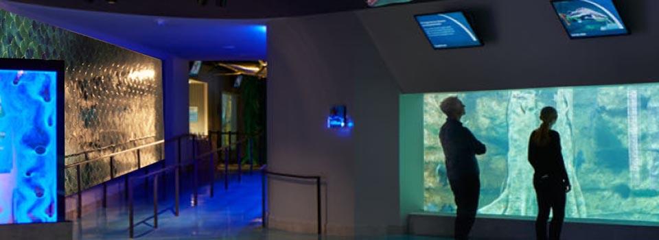 """8"""" Fan Aquarium Blend"""