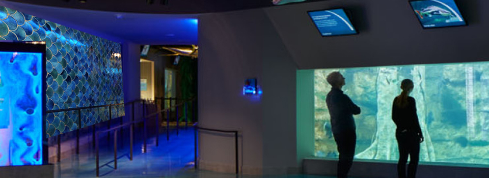 feature-toledo-aquarium2